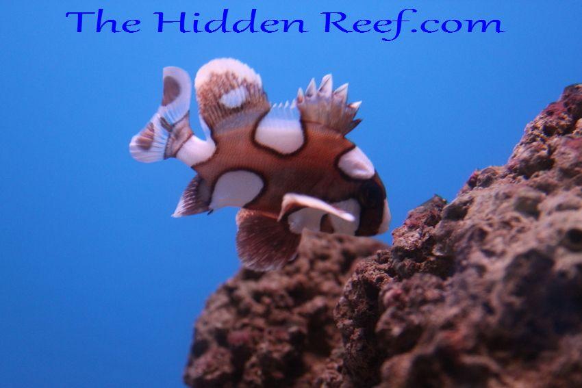 The Hidden Reef: Saltw...