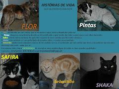 HISTÓRIAS DE VIDA