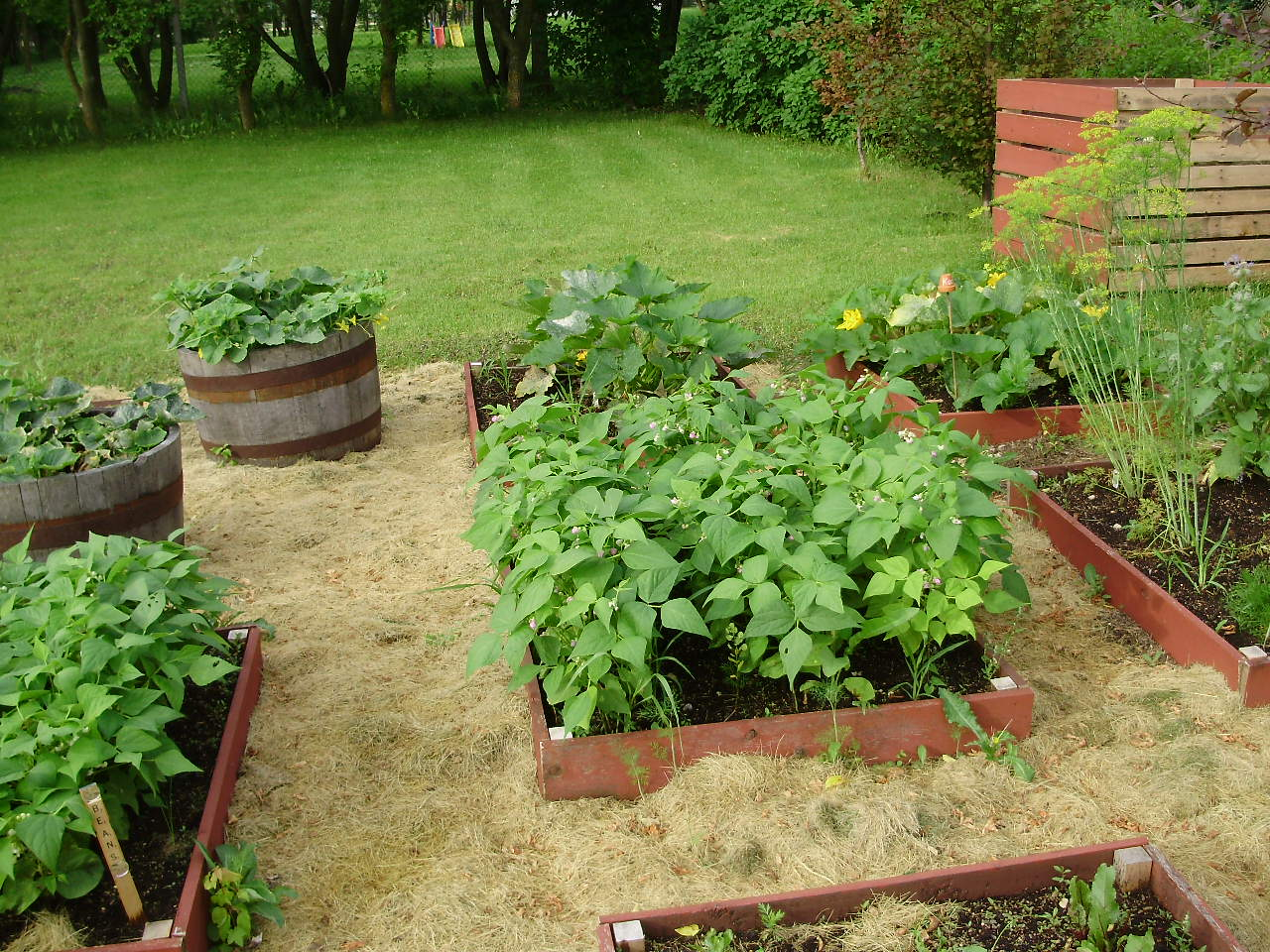 All Things Simple: gardens