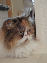 My beloved cat