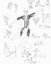Ejercicios para fortalecer la porción anterior (arriba) y posterior (abajo) del cuerpo