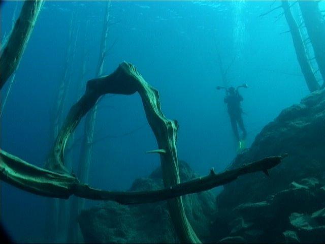 bosque sumergido lago traful