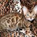 13 Binatang Peliharaan Termahal