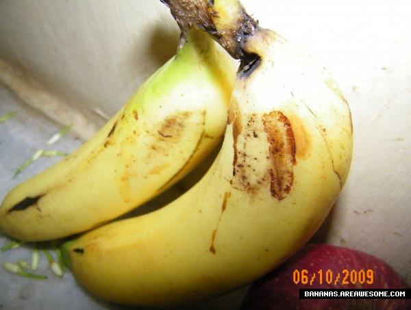 [Image: jesus_banana_3.jpg]