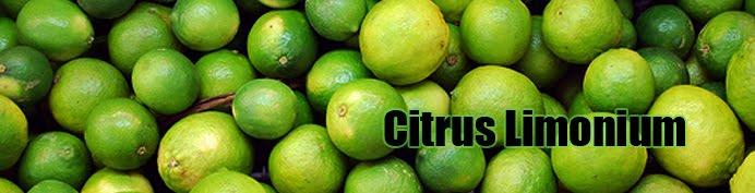 Citrus Limonium