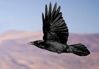 Ravens flying wallpaper - photo#23