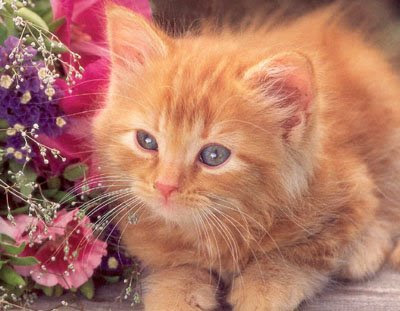 cute & sweet cats pics-pictures/photos/wallpapers gallery