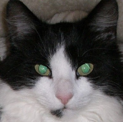 cats eyes in the dark images/pictures gallery
