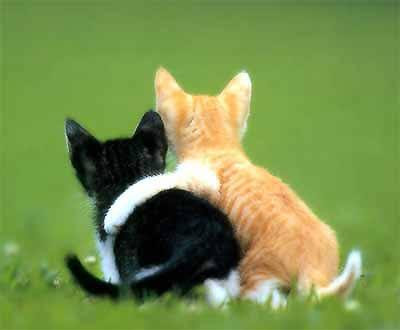 cute cats and kittens pictures/photos gallery