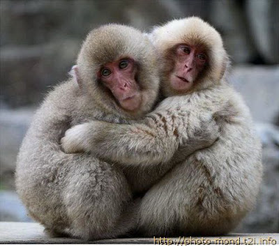 pictures of monkeys in love cute wallpapers<br />
