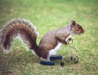 hitech Florida Squirrel pics