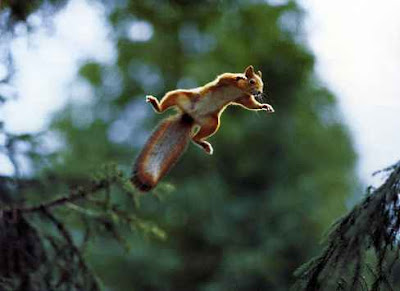 squirrel jumping like monkey photo gallery