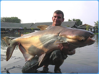 giant catfish photos collection