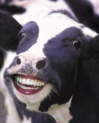 free online pictures of cows head,teeths photos,images
