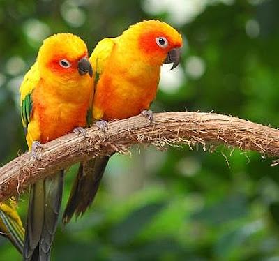 Cute love birds pair  photo gallery