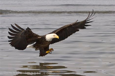 Flying the eagle wings water photos<br />