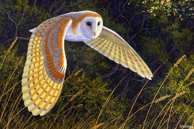 Night Barn Owl Flying free downloading wallpapers