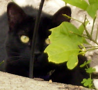 Tica, hiding