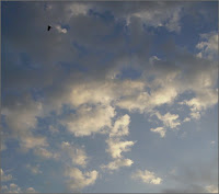 July Sky, with bird