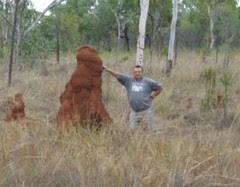medium termite mound