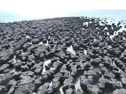 Stomatolites, Hamelin pool