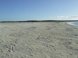 Shell beach, Shark bay, WA
