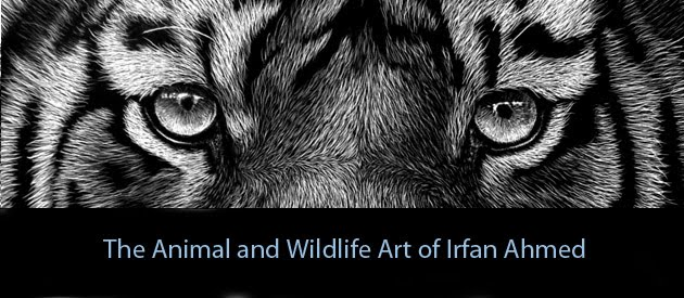 The Wildlife Scratchboards Of Irfan Ahmed