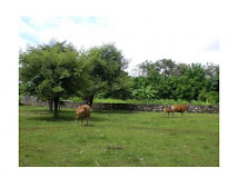 Land Site