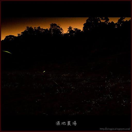 濕地農場螢火蟲