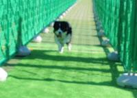 http://border-polly.blogspot.jp/2008/11/1.html
