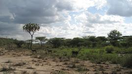 """""""Samburu"""""""