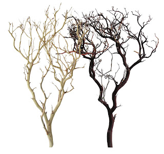 [Manzanita+Branches.jpg]