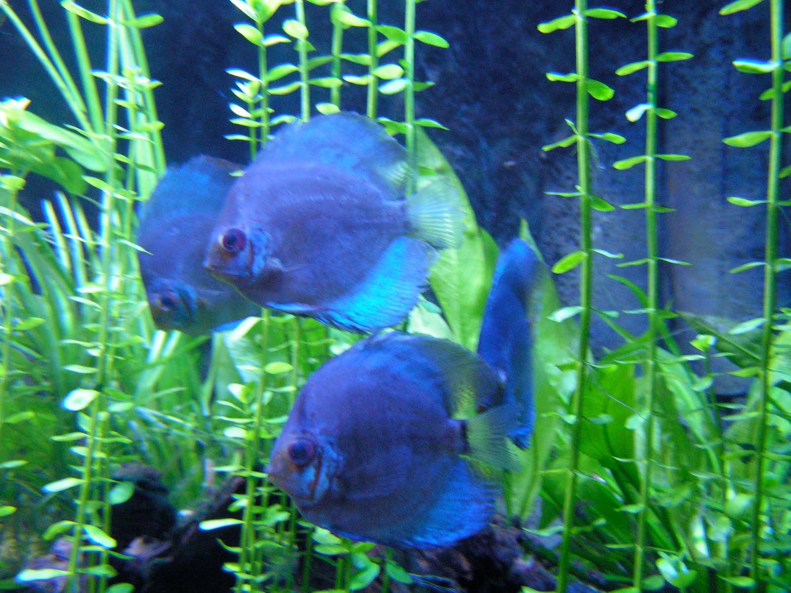 Fragile X Association Of Utah Aquarium Family Activity