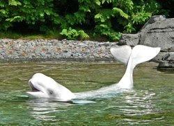 Ballenas Blancas