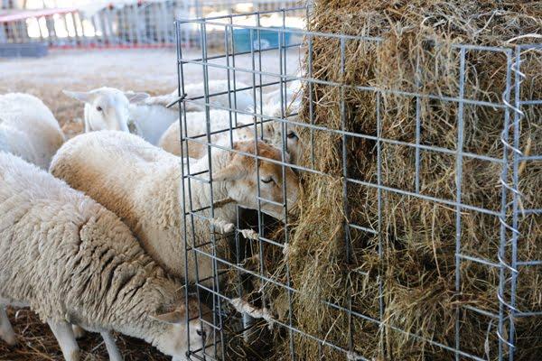 Premier Farm Diary: November 2010