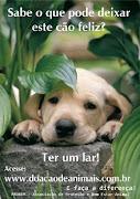adote um cachorro!