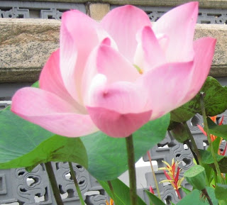Lotus in thailand exploring amazing thailand according to wikipedia lotus roots have been found to be rich in dietary fiber vitamin c potassium thiamin riboflavin vitamin b6 phosphorus copper mightylinksfo