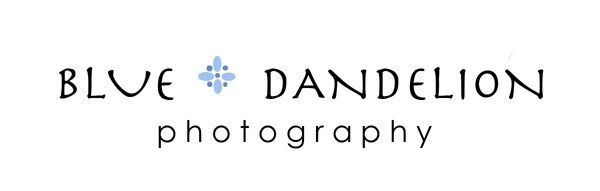 Blue Dandelion Photography
