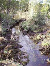 Estero/Creek