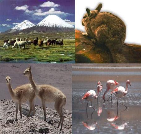 Leslitahh fauna de la zona norte for Marmoles y granitos zona norte