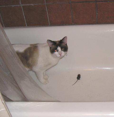 [evil+kitty]
