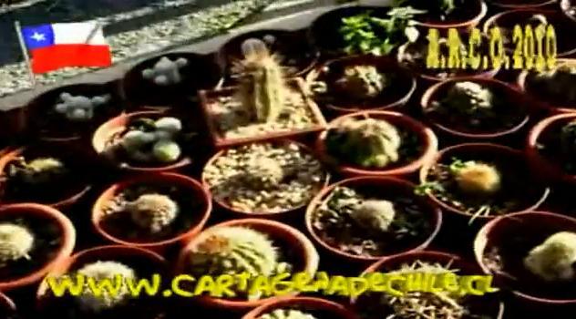 Cartagena cartagena de chile cactario de lo abarca for Cactarios en chile