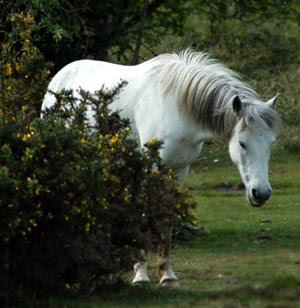 White Horse