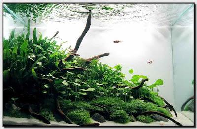aquascape indonesia: Aquascape Adalah ...