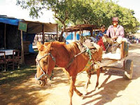 Maltrato a caballos en bolivia 1