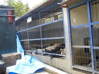 Perros usados como alfombras 16