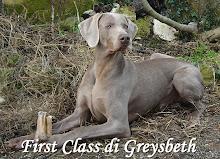 First Class di Greysbeth