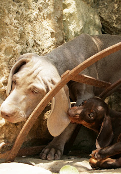 weim and friend Lamù