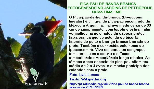 AVIFAUNA DO JP: PICA-PAU