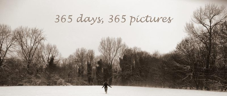 365 DAYS, 365 PICTURES